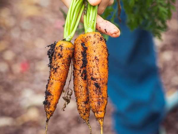 étude agroalimentaire